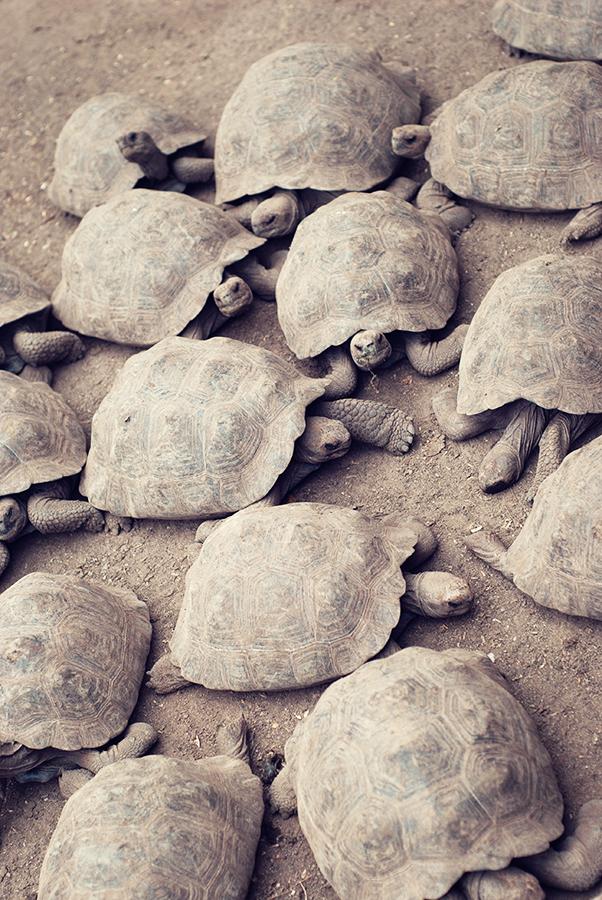 tortoisegroup